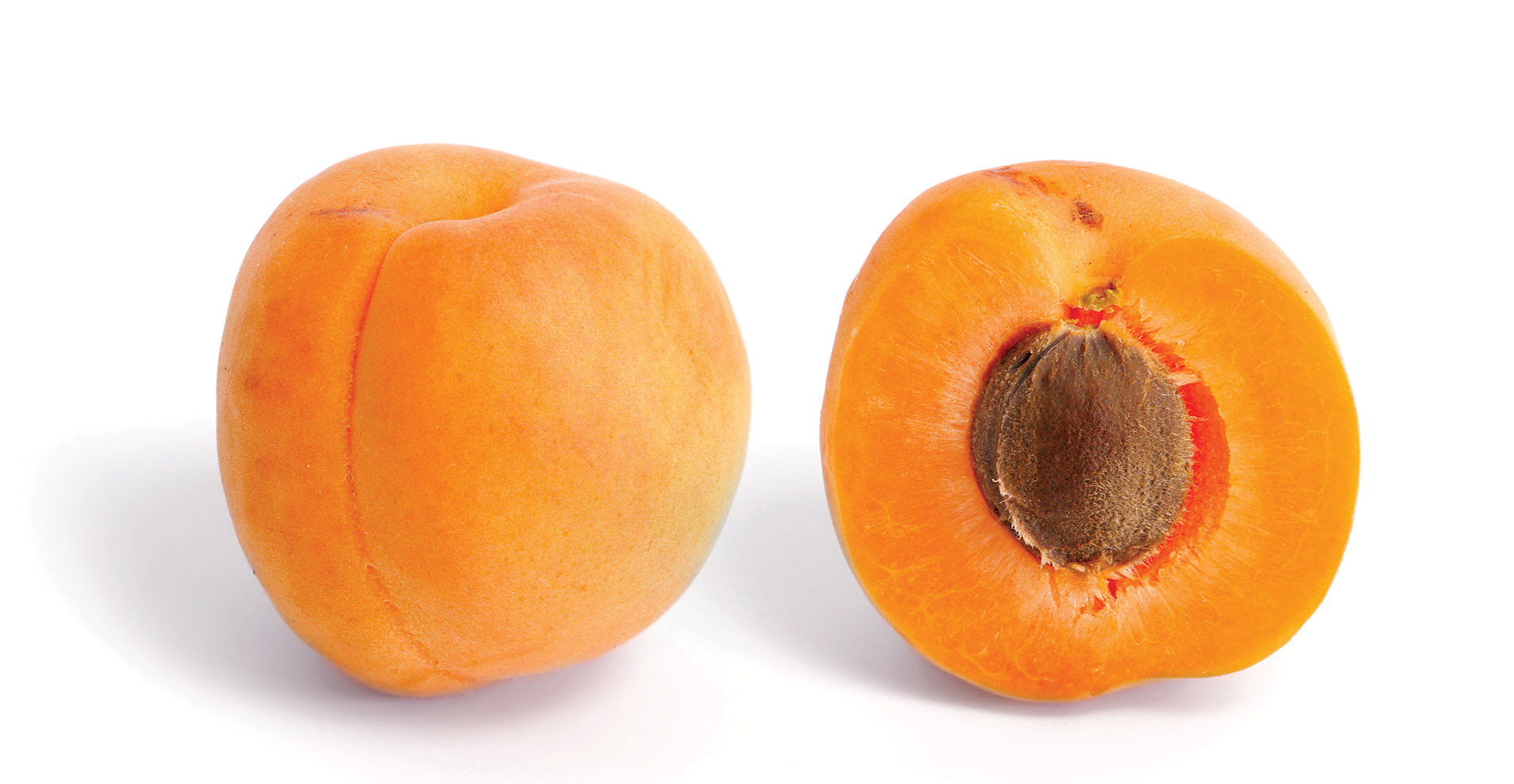 apricot and cross section large 1508326745